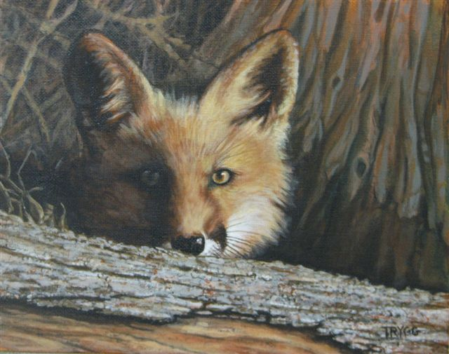 Eyes of the Forest - Red Fox