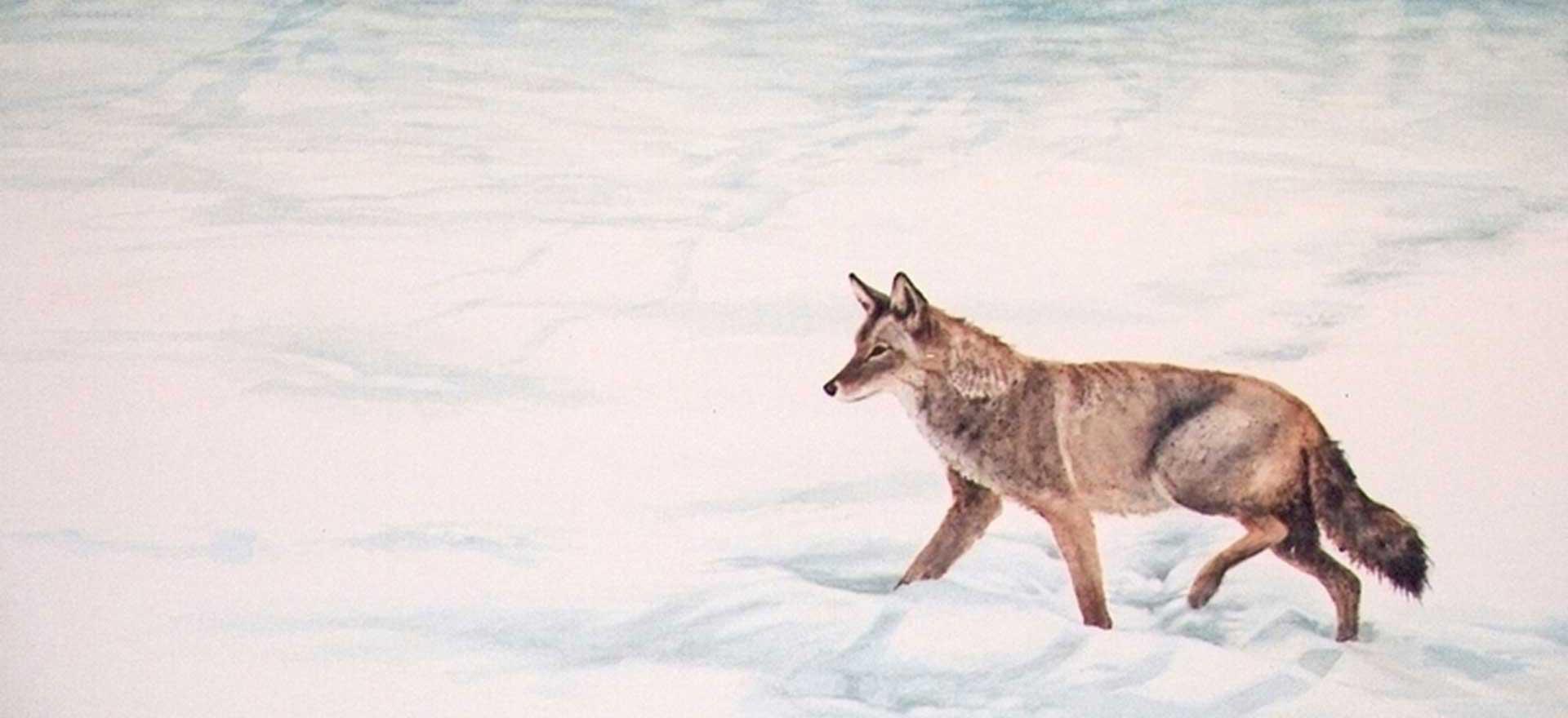 Winter-Tracks--Joyce-Trygg-Watercolor
